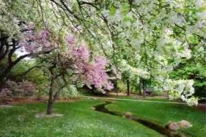 Springtime beauty at Dow Gardens, Midland