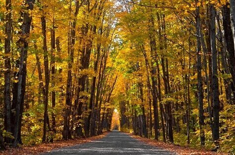 Two-lane road under a gold and green autumn tree canopy