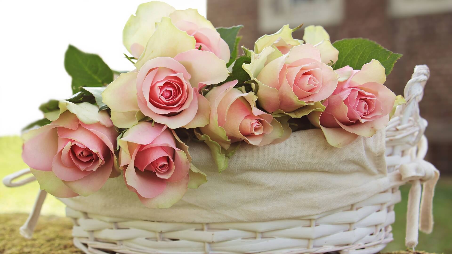 Roses in a bundle