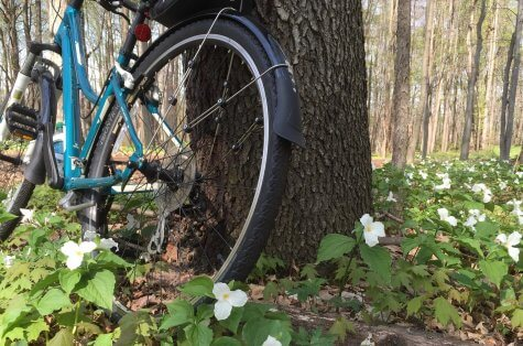 Bicycle is propped against a tree in a woods with trillium