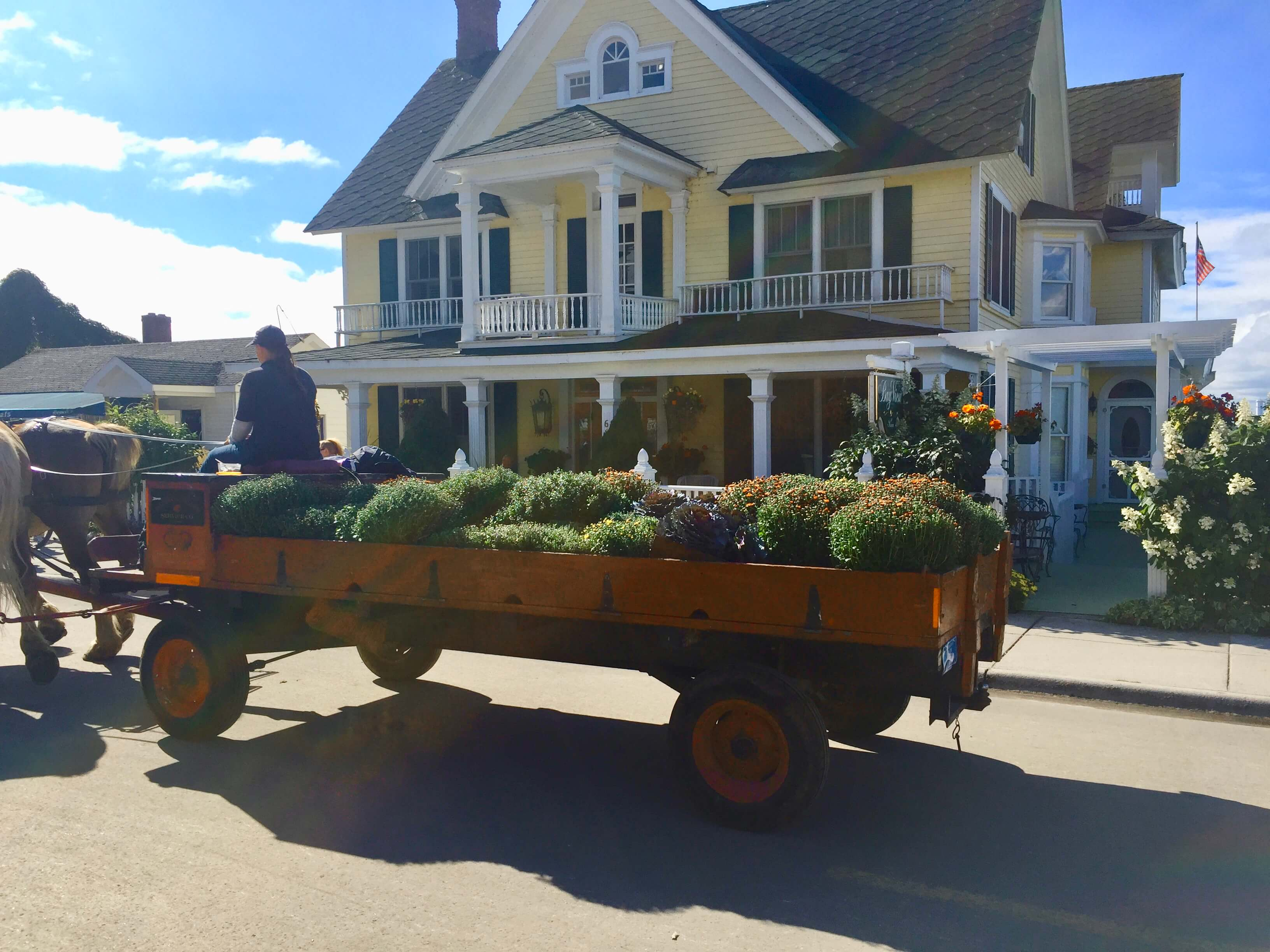 Horse-drawn cart carries a load of chrysanthemums in front of Bay View B&B