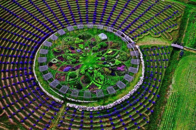 Lavender and herb labyrinth at Cherry Point Farm and Market, an attraction visited by many Up North Michigan visitors.