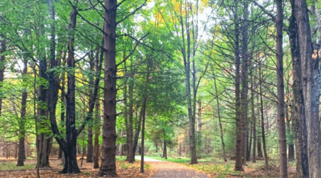 Hike, Bike, Drive: Fall in Ludington