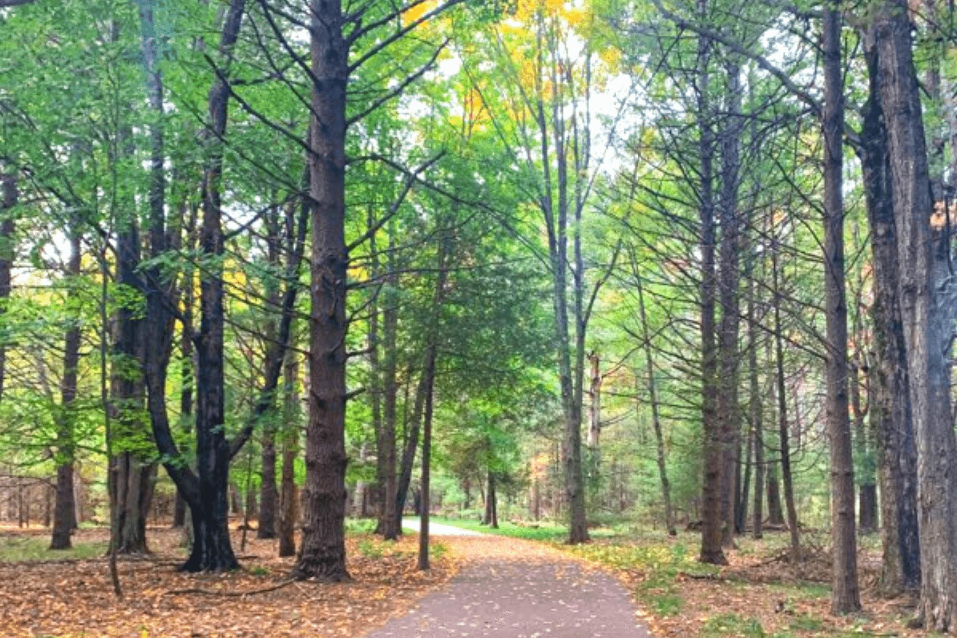 Fall hike in Ludington, MI