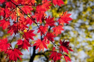 Fall in Ludington, MIchigan