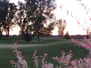 View of the green with pink flowering tress in the foreground. At The Emerald Golf Course.