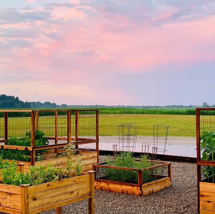 Sun sets at The Morris Estate. In foreground, raised, covered beds of