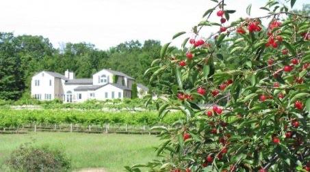 Vineyard Getaway for Less