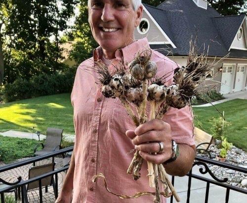 Greg Hillebrand holds garlic he just harvested.