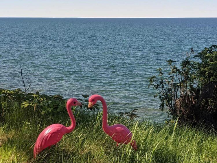 A pair of pink plastic flamingos with Lake Superior in background, one of many beautiful outdoor spaces at Michigan B&Bs.
